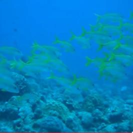 Kerama Islands Ariga