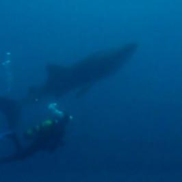 Me and a Whale Shark