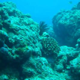 Reef at Kouri